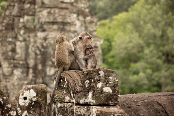 Why Cambodia?
